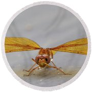Dragon Fly Hanging Around Round Beach Towel