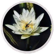 Dragon Fly On Lily Round Beach Towel