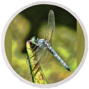 Dragonfly 2 Round Beach Towel
