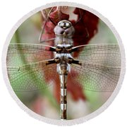 Stream Cruiser Dragonfly  Round Beach Towel