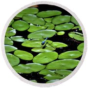 Round Beach Towel featuring the photograph Dragonfly Among The Lily Pads by Tara Potts
