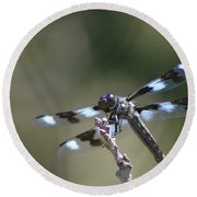 Dragonfly Hanging On  Round Beach Towel