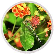 Round Beach Towel featuring the photograph Dragonfly by Kathy Baccari