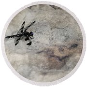 Dragonfly On Solid Ground Round Beach Towel