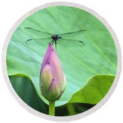 Dragonfly Landing On Lotus Round Beach Towel