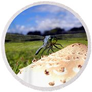 Dragonfly On A Mushroom Round Beach Towel