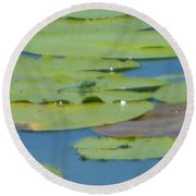 Dragonfly On Lily Pad Round Beach Towel