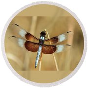 Round Beach Towel featuring the photograph Dragonfly On Reed by Sheila Brown