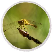 Dragonfly Perched Round Beach Towel