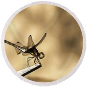 Round Beach Towel featuring the painting Dragonfly Resting On The Clothesline by Odon Czintos