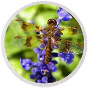 Round Beach Towel featuring the photograph Dragonfly by Sandi OReilly