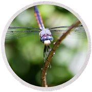 Dragonfly Watching Round Beach Towel
