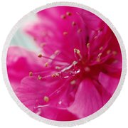 Dreaming In Pink Round Beach Towel by Rachel Mirror