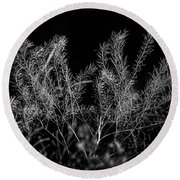 Dried Plant Round Beach Towel
