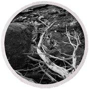 Driftwood Tree, La Verna Preserve, Bristol, Maine  -20999-30003 Round Beach Towel