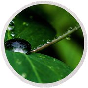 Round Beach Towel featuring the photograph Droplets On Stem And Leaves by Darcy Michaelchuk