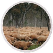 Droving Sheep  At Albert Australia Round Beach Towel