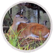 Round Beach Towel featuring the photograph Drowsy Deer by Al Powell Photography USA