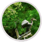Drying Indian Cormorant Round Beach Towel