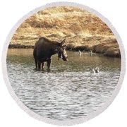 Ducks - Moose Rollinsville Co Round Beach Towel