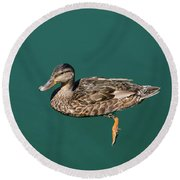 Round Beach Towel featuring the photograph Duck Floats by Davor Zerjav