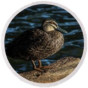 Duck On A Log Round Beach Towel