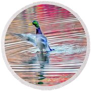 Duck On An Autumn Pond In The Chesapeake Bay Maryland Round Beach Towel