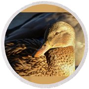 Duck Sunbathing Round Beach Towel