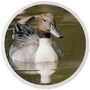 Duck Swimming, Front Portrait. Round Beach Towel