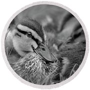 Round Beach Towel featuring the photograph Ducklings Cuddling Bw by Susan Candelario