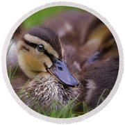 Round Beach Towel featuring the photograph Ducklings Cuddling by Susan Candelario