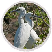 Dueling Egrets Round Beach Towel