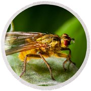 Dung Fly On Leaf Round Beach Towel