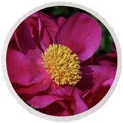 Dusted In Peony Pollen Round Beach Towel by Rachel Cohen