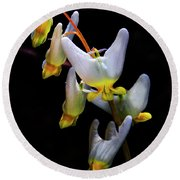 Dutchmans Breeches Round Beach Towel by Barbara Bowen