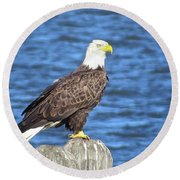 Eagle At East Point  Round Beach Towel by Nancy Patterson