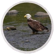 Round Beach Towel featuring the photograph Eagle Deep In Thought by Debbie Stahre