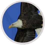 Eagle Flying Closeup Round Beach Towel by Coby Cooper