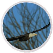 Round Beach Towel featuring the photograph Eagle Gang by Coby Cooper