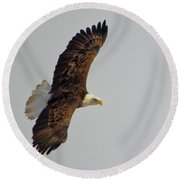 Eagle In Flight Round Beach Towel