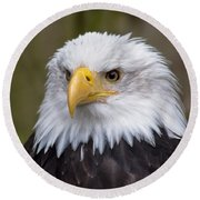 Eagle In Ketchikan Alaska Round Beach Towel