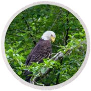 Eagle In The Tree Round Beach Towel