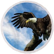 Eagle Landing On A Branch Round Beach Towel