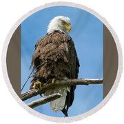 Eagle On Perch Round Beach Towel