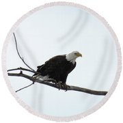 Eagle On The Tree Branch Round Beach Towel