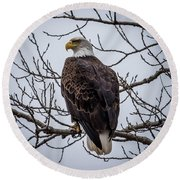 Round Beach Towel featuring the photograph Eagle Perched by Paul Freidlund