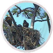 Round Beach Towel featuring the photograph Eagle Series Baby by Deborah Benoit