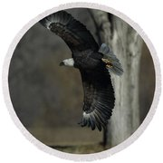 Round Beach Towel featuring the photograph Eagle Soaring By Tree by Coby Cooper