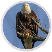 Eagle Stare Round Beach Towel