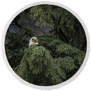 Round Beach Towel featuring the photograph Eagle Tree by Timothy Latta
